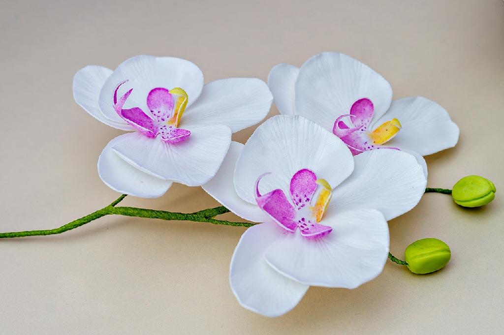 Орхидеи фаленопсис из фоамирана, мастер-класс