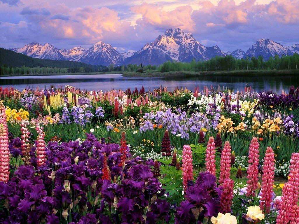 Ответь, какого цвета   красавица - планета?