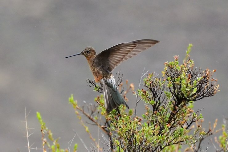 Hummingbird Meaning and Symbolism  The Astrology Web