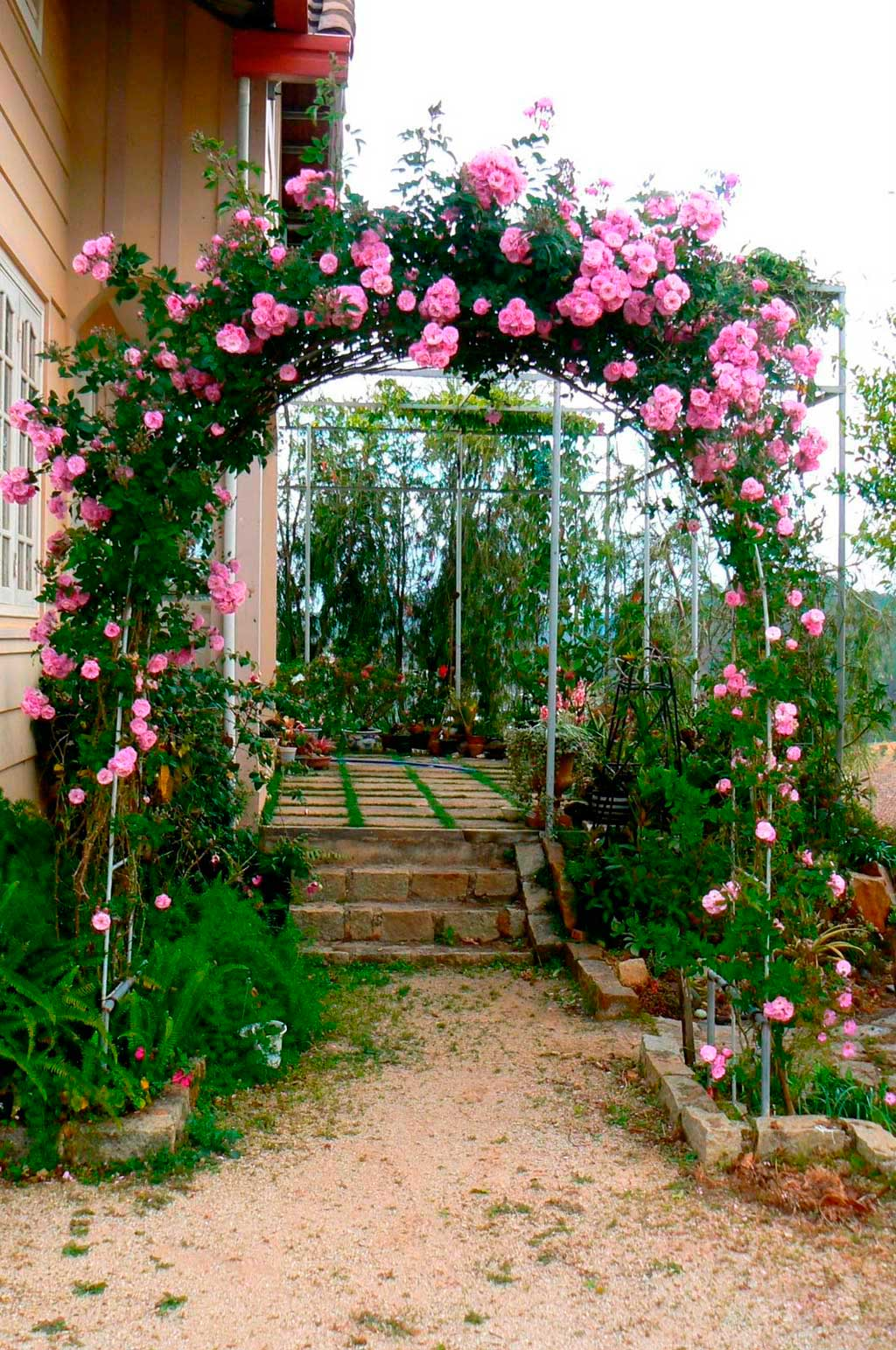 Арка для плетущихся роз